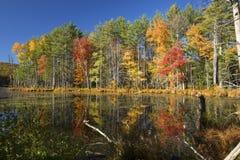 Reflexiones del follaje de otoño brillante en Plymouth, New Hampshire Foto de archivo libre de regalías