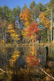 Reflexiones del follaje de otoño brillante en Plymouth, New Hampshire Imagen de archivo libre de regalías