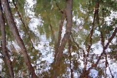 Reflexiones del humedal Foto de archivo libre de regalías