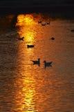 Reflexiones del lago en la puesta del sol Fotografía de archivo libre de regalías