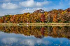 Reflexiones del otoño, lago del este de la bota, Minnesota Imágenes de archivo libres de regalías