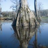 Reflexiones del pantano de Cypress Foto de archivo libre de regalías