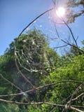 Reflexiones del sol de la web de araña fotografía de archivo