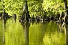Reflexiones del verde esmeralda Imágenes de archivo libres de regalías