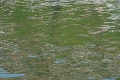 Reflexiones en agua Imágenes de archivo libres de regalías