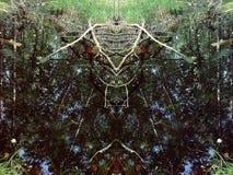 Reflexiones en el agua del pequeño pantano en el bosque Fotografía de archivo libre de regalías