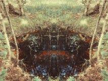 Reflexiones en el agua oscura del pequeño pantano en el bosque Imagen de archivo libre de regalías