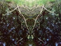 Reflexiones en el agua oscura del pequeño pantano en el bosque Foto de archivo libre de regalías