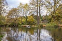 Reflexiones en el lago en la caída Fotografía de archivo