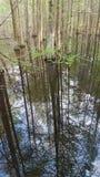 Reflexiones en el pantano Foto de archivo libre de regalías