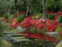 Reflexiones en rojo Fotos de archivo