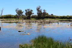 Reflexiones en un lago wetland Fotografía de archivo