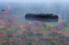 Reflexiones flotantes del otoño del inicio de sesión Foto de archivo libre de regalías