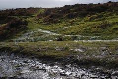 Reflexiones iluminadas por el sol en hierba y brezo Imagen de archivo libre de regalías