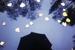 reflexiones lluviosas del tiempo hombre con un paraguas debajo de la lluvia Mún tiempo otoño - se va en el camino foto de archivo libre de regalías