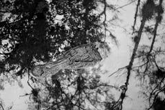 Reflexiones peligrosas II Imagen de archivo libre de regalías