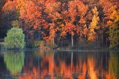 Reflexiones perfectas del otoño Fotos de archivo