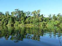 Reflexiones - río tropical B Fotografía de archivo libre de regalías