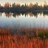 Reflexiones septentrionales del treeline de Michigan en la puesta del sol Imagen de archivo