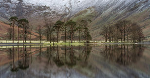 Reflexiones tranquilas de los árboles de pino en Buttermere en el distrito del lago, Reino Unido Imagenes de archivo
