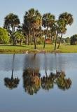 Reflexiones tropicales de la palma Fotografía de archivo libre de regalías