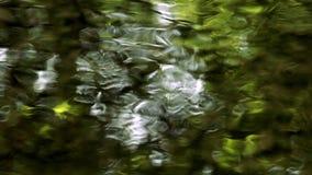 reflexiones verdes del agua almacen de metraje de vídeo
