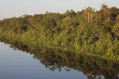 Reflexionsbäume auf Wasser Stockfotos