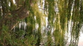 reflexionsflod Royaltyfri Bild