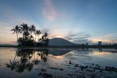Reflexionsrad av kokospalmen i morgonen av Permatang Rawa Arkivfoton