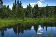 Reflexionsteichbäume und grünes Gras Lizenzfreies Stockbild
