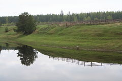 reflexionstree Arkivfoton
