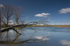 Reflexão azul Fotografia de Stock Royalty Free