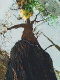 Reflexo da árvore na água Fotografia de Stock Royalty Free