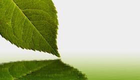 Reflexão da folha e da água Imagens de Stock
