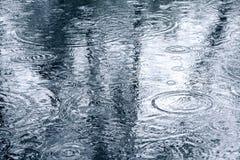 Reflexão da água das árvores sobre espelho-como a superfície da poça Imagens de Stock