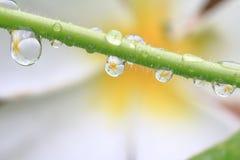 A reflexão das flores Imagens de Stock Royalty Free