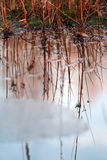 Reflexão das plantas na água Imagens de Stock Royalty Free