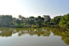 A reflexão das árvores na água Foto de Stock Royalty Free