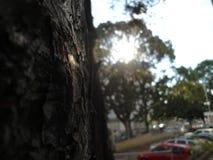 Reflexo de Sun Fotos de Stock Royalty Free