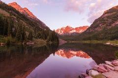Reflexão marrom de Bels no verão Fotos de Stock Royalty Free