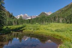 Reflexão marrom do verão de Bels Foto de Stock