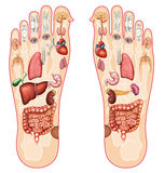Reflexology Stock Image