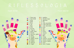 Reflexology hand chart Stock Image