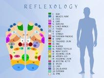 Reflexology. Illustration of foot reflexology chart Stock Photos
