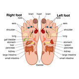 Reflexology zones of the feet Stock Images