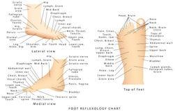 Reflexologydiagram Arkivfoton