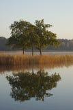 reflextion tre trees Fotografering för Bildbyråer