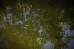 Refliction auf dem Wasser Stockbild