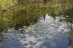 Refllections dans le marais Photographie stock libre de droits