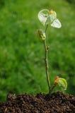 Reflorestamento Imagem de Stock